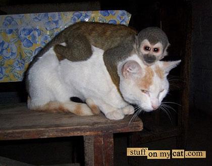 Gatico y monete. Ay el gatico!!!!